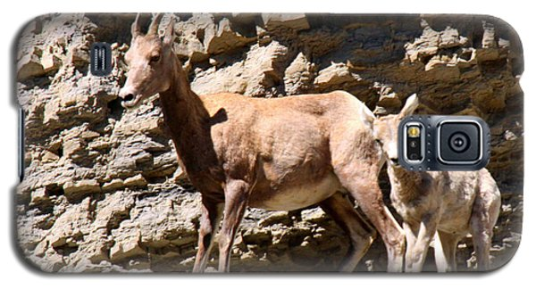 Female Bighorn Sheep With Juvenile Galaxy S5 Case