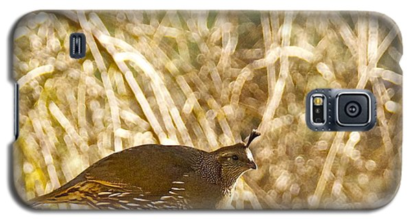 Female California Quail Galaxy S5 Case by Sean Griffin