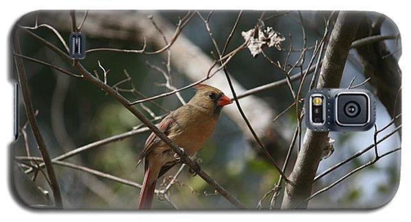 Female Cardinal 3 Galaxy S5 Case