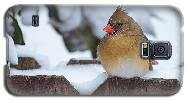 Female Cardinal Galaxy S5 Case
