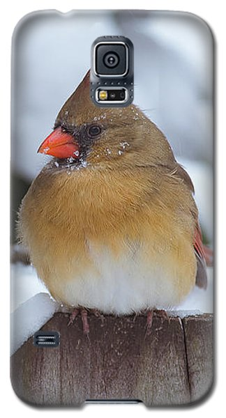 Female Cardinal Galaxy S5 Case