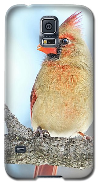 Female Cardinal On A Winter Morning Galaxy S5 Case