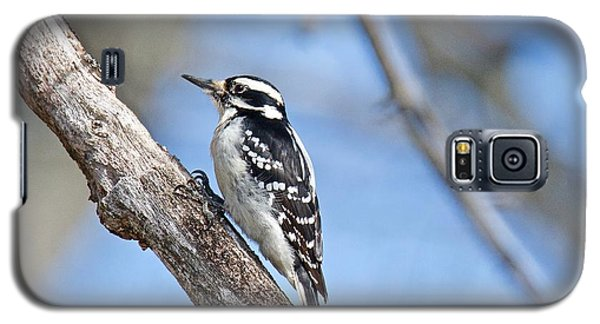 Galaxy S5 Case featuring the photograph Female Downey Woodpecker 1104  by Michael Peychich