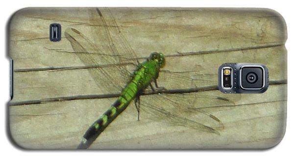 Female Eastern Pondhawk Dragonfly Galaxy S5 Case