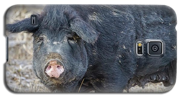 Galaxy S5 Case featuring the photograph Female Hog by James BO Insogna
