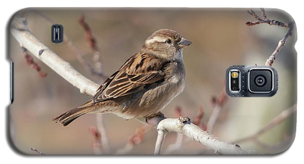 Female House Sparrow Galaxy S5 Case