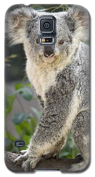 Female Koala Galaxy S5 Case
