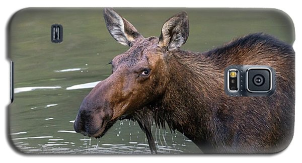 Galaxy S5 Case featuring the photograph Female Moose Head by James BO Insogna