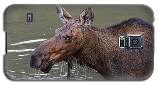 Galaxy S5 Case featuring the photograph Female Moose Head Shot by James BO Insogna