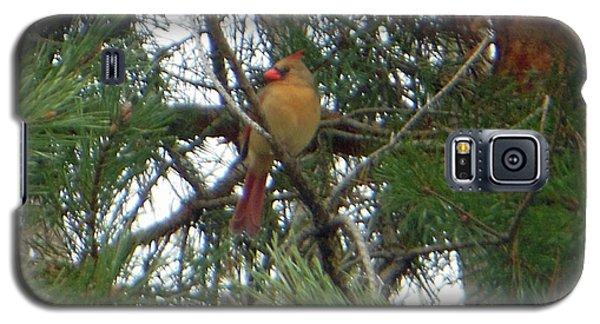 Female Northern Cardinal Galaxy S5 Case