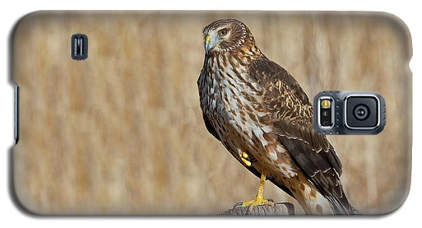 Female Northern Harrier Standing On One Leg Galaxy S5 Case