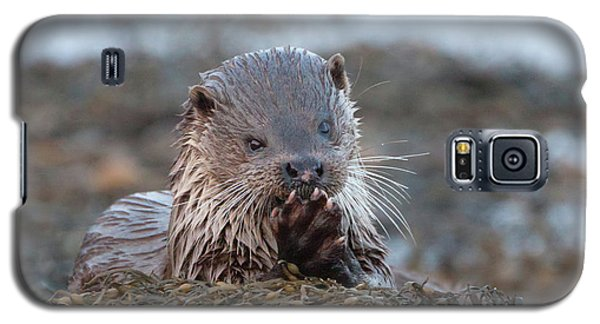 Female Otter Eating Galaxy S5 Case