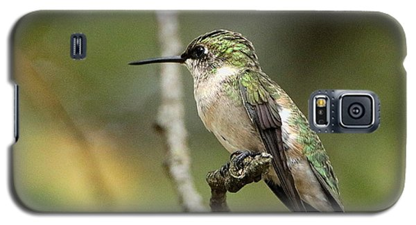 Female Ruby-throated Hummingbird On Branch Galaxy S5 Case