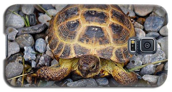 Female Russian Tortoise Galaxy S5 Case
