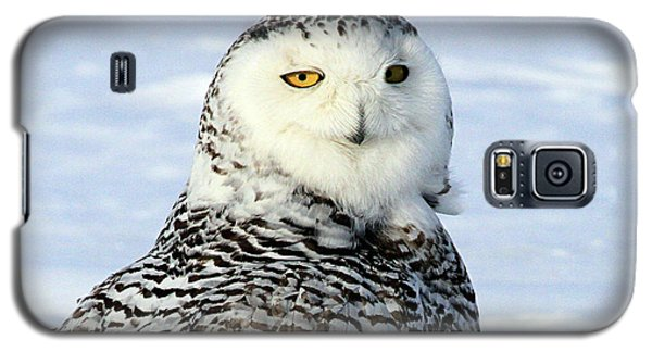 Female Snowy Owl Galaxy S5 Case