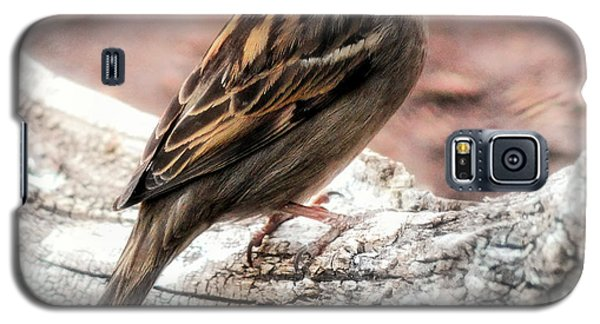 Female Sparrow Galaxy S5 Case
