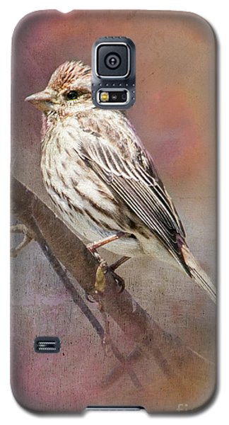 Female Sparrow On Branch Ginkelmier Inspired Galaxy S5 Case