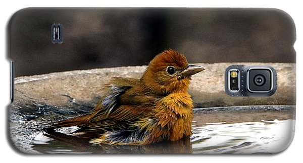 Female Summer Tanager In Bird Bath Galaxy S5 Case