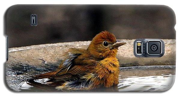 Female Summer Tanager In Bird Bath Galaxy S5 Case