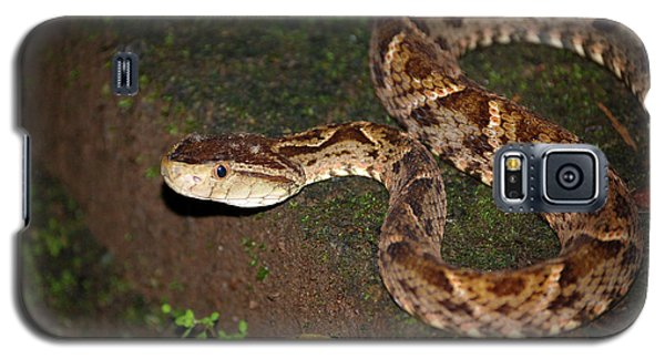 Galaxy S5 Case featuring the photograph Fer-de-lance, Botherops Asper by Breck Bartholomew