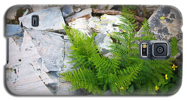 Fern Among Glacial Rock Galaxy S5 Case