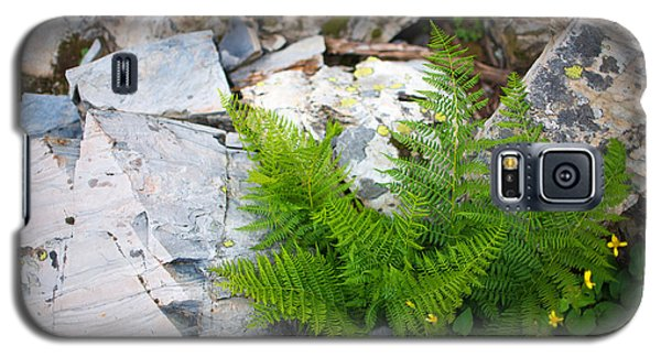 Fern Among Glacial Rock Galaxy S5 Case