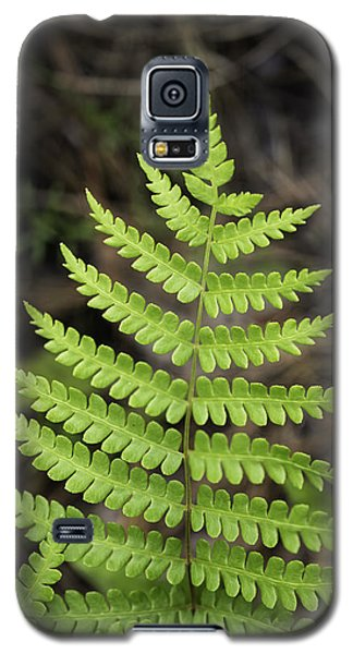 Fern Fron 01 Galaxy S5 Case