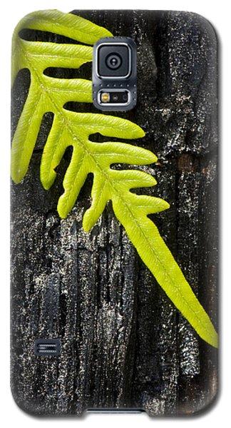 Fern On Burnt Log Galaxy S5 Case