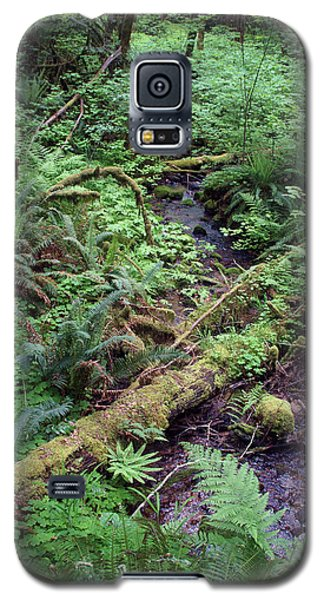 Galaxy S5 Case featuring the photograph Ferns Galore by Ben Upham III