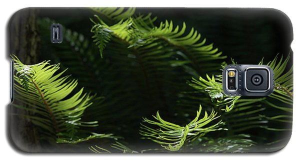Ferns In The Forest Galaxy S5 Case