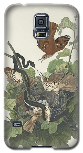 Ferruginous Thrush Galaxy S5 Case by Rob Dreyer