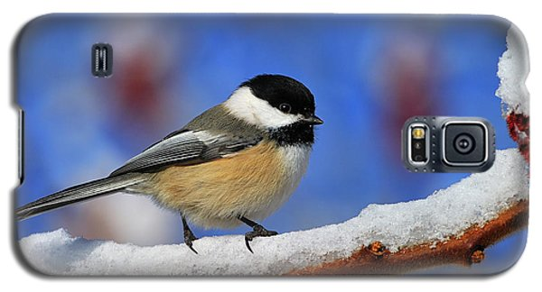 Galaxy S5 Case featuring the photograph Festive Chickadee by Tony Beck