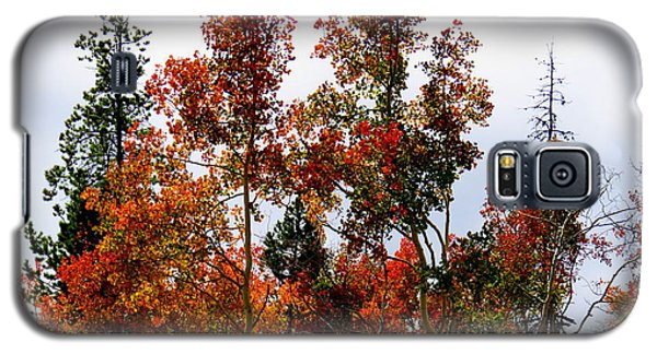 Galaxy S5 Case featuring the photograph Festive Fall by Karen Shackles