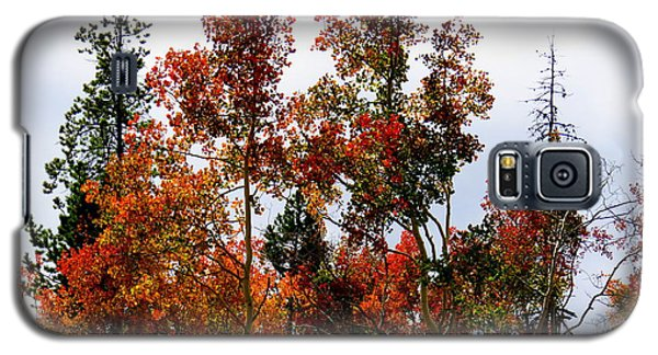 Festive Fall Galaxy S5 Case by Karen Shackles