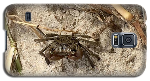 Galaxy S5 Case featuring the photograph Fiddler Crab by Janice Spivey