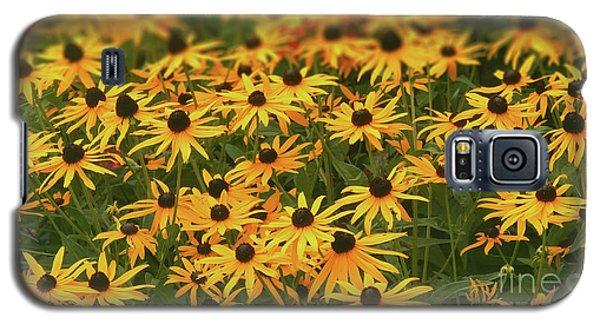 Field Of Black-eyed Susans Galaxy S5 Case