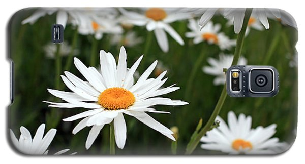 Field Of Daisies Galaxy S5 Case by Dorothy Cunningham