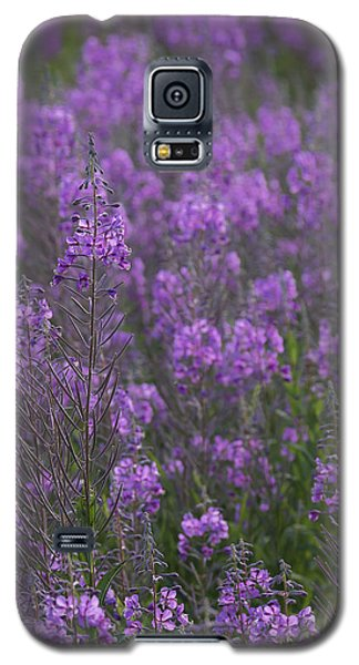 Field Of Fireweed Galaxy S5 Case