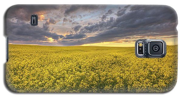 Galaxy S5 Case featuring the photograph Field Of Gold by Dan Jurak