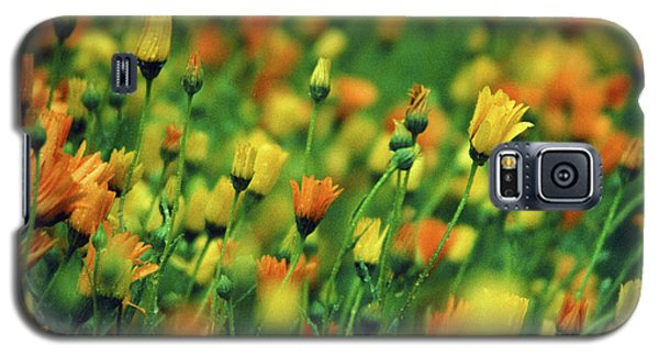 Field Of Orange And Yellow Daisies Galaxy S5 Case
