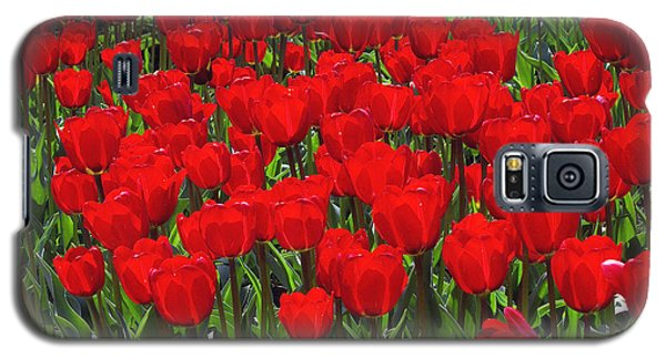 Field Of Red Tulips Galaxy S5 Case