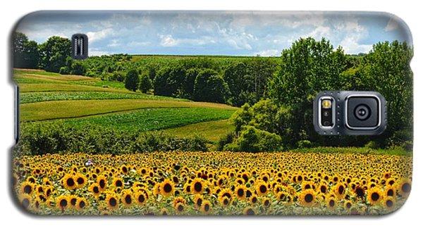 Field Of Sunflowers Galaxy S5 Case