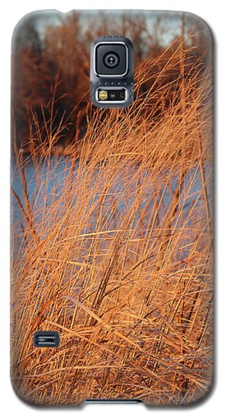 Amber Brush On The River Galaxy S5 Case