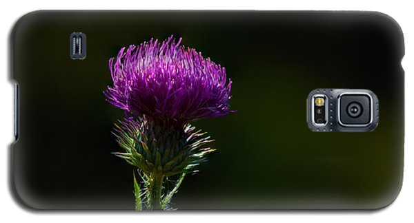 Field Thistle Galaxy S5 Case