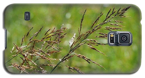 Fields Of Grain Galaxy S5 Case