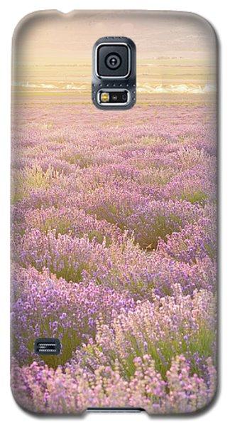 Fields Of Lavender Galaxy S5 Case