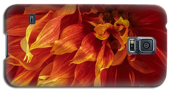 Fiery Dahlia Galaxy S5 Case by Chris Scroggins
