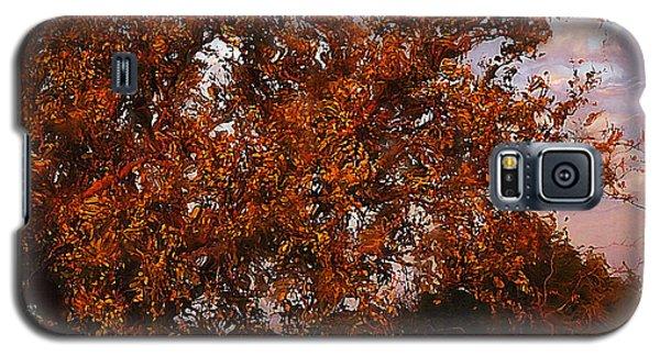 Fiery Elm Tree  Galaxy S5 Case