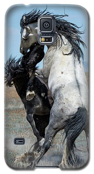 Fighting Black And Gray Stallions Galaxy S5 Case by Mary Hone
