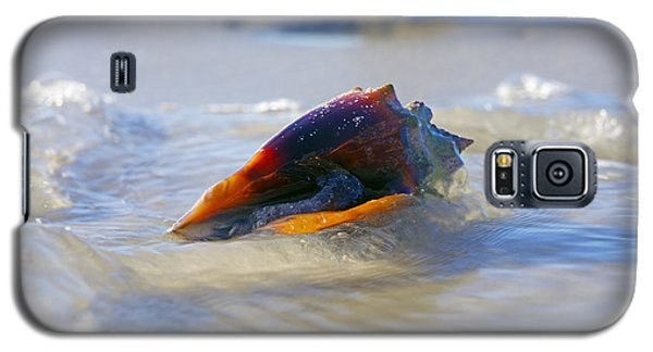 Fighting Conch On Beach Galaxy S5 Case by Robb Stan